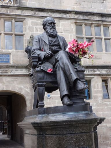 Darwin during the Shrewsbury Flower Show, August 2014  © Richard Burnham 2014